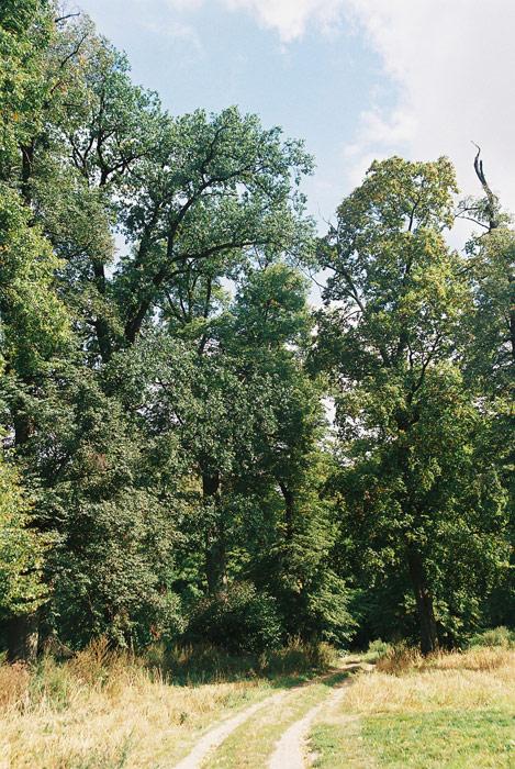 Gulbiny - Lipowa aleja prowadząca do parku podworskiego - fot.A.Hermann